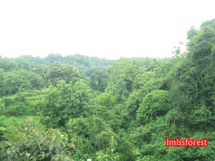 Hutan dibelakang toilet museum, masih asri banget (dokumentasi pribadi, taken by Canon PowerShot A2300)