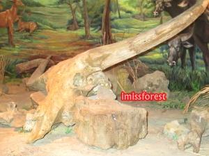 Fosil kepala hewan (dokumentasi pribadi, taken by Canon PowerShot A2300