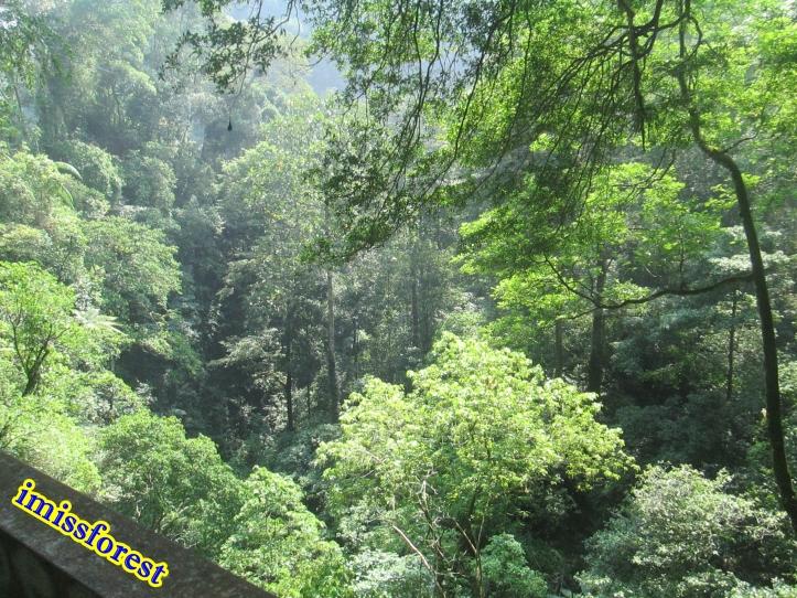 Masih hijau banget kan? (dokumentasi pribadi, taken by Canon PowerShot A2300)