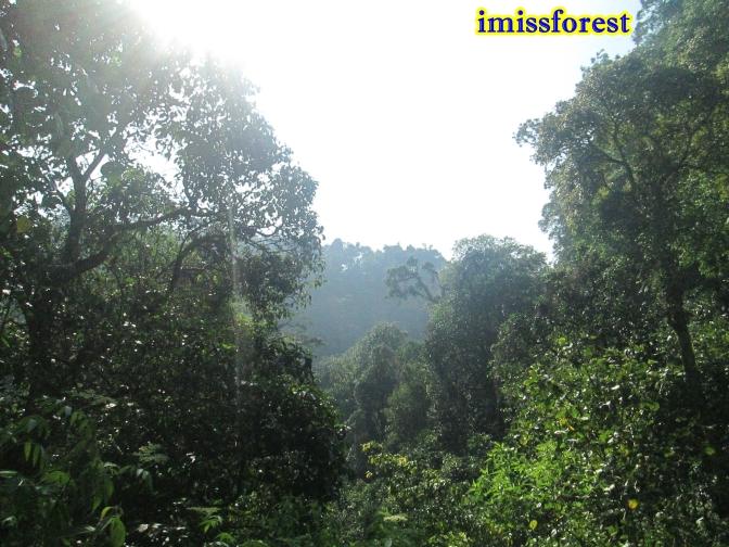 Pepohonannya keren (dokumentasi pribadi, taken by Canon PowerShot A2300)