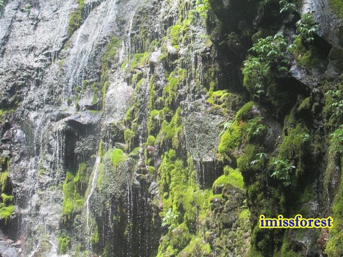 Bebatuan di sekitar air terjun, masih asri banget banyak lumutnya (dokumentasi pribadi, taken by Canon PowerShot A2300)